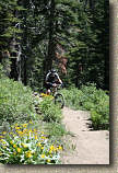images/Trails/LakeTahoe/Tahoe-08JUL05-ChristmasValley-22.jpg