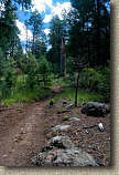 images/Trails/AZ06/AZ06-Flagstaff-1AUG06-05.jpg